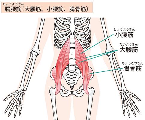 上半身と下半身を繋ぐ腸腰筋